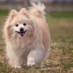 dog-1113398_640