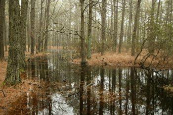 swamp-851827_640